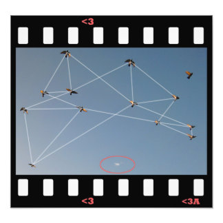 birds- plotted photo print