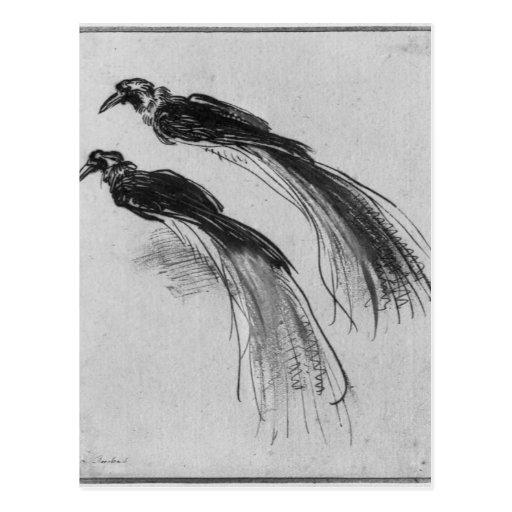 Birds Postcard