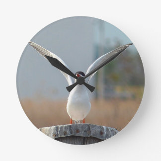 birds round clock