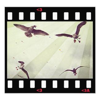 birds- seagulls photograph