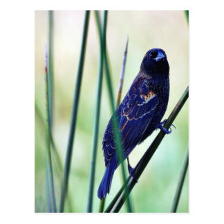 Birds Swamps Postcard