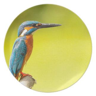 birdy bird boo valantines day plate