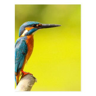 birdy bird boo valantines day postcard
