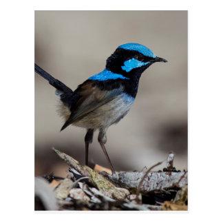 birdy birdy boo postcard