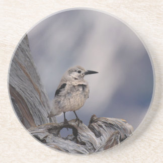 birdy love drink coasters