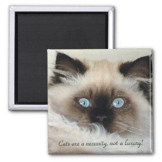 Birman - Ragdoll Cat Lover Magnet