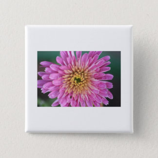 Birth Flower -November - Chrysanthemum 2 Inch Square Button