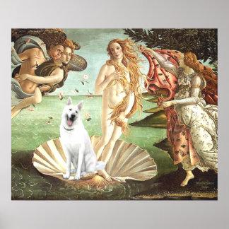 Birth of Venus-White German Shepherd Poster