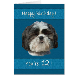 Birthday, 12th, Shih Tzu Dog Card