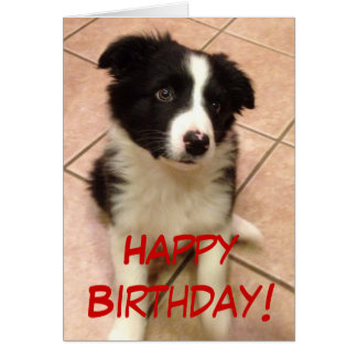 Birthday Border Collie Puppy Greeting Card