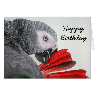 Birthday card  Congo African Grey Grey Parrot