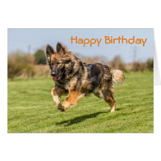Birthday Card German Shepherd Dog