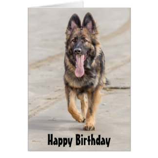 Birthday Card German Shepherd Dog Alsatian