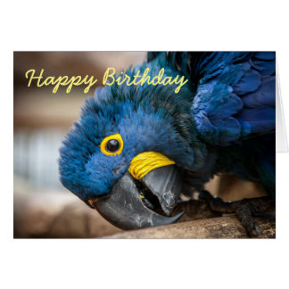 Birthday card Hyacinth Macaw parrots