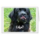 Birthday Card Newfoundland dog humour