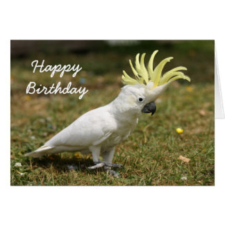 Birthday card Sulphur Crested cockatoo parrot