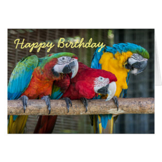 Birthday card three Macaw parrots