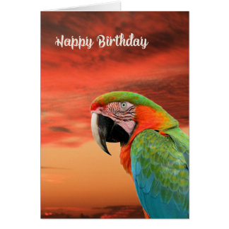 Birthday Card with Colorful Parrot & Sunset