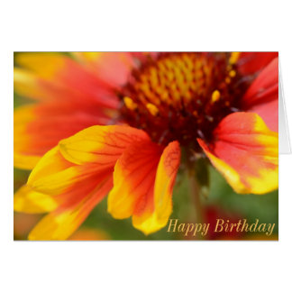 Birthday Card with Orange Flower