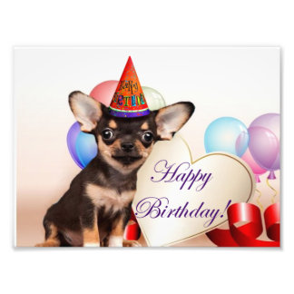 Birthday Chihuahua dog Photograph