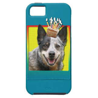 Birthday Cupcake - Australian Cattle Dog iPhone 5 Cover