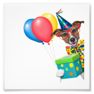 Birthday Dog With Balloons Tie and Glasses Photograph
