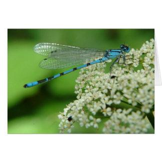 Birthday Dragonfly Card