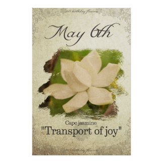 """Birthday flowers on May 6th """"Cape jasmine"""" Poster"""