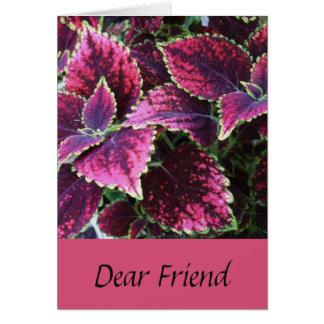 Birthday for a friend, pretty coleus plant. card