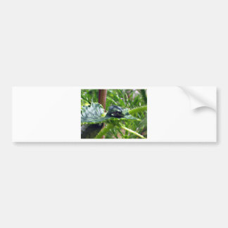 Birthday Frog Bumper Sticker