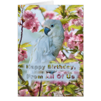 Birthday, From All of Us, White Parrot Greeting Card