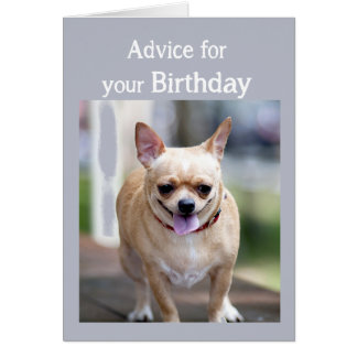 Birthday Humor Chihuahua Too Much Birthday cake Greeting Card