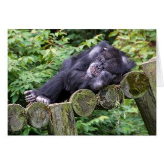 birthday humor-chimp napping card