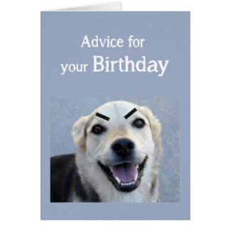 Birthday Humor Cute Dog New Trend Eyebrows Fun Card