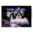 Birthday Humour - Cute Shih-Tzu Puppy Card
