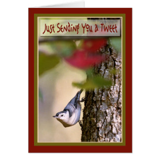 Birthday - Nuthatch Greeting Card