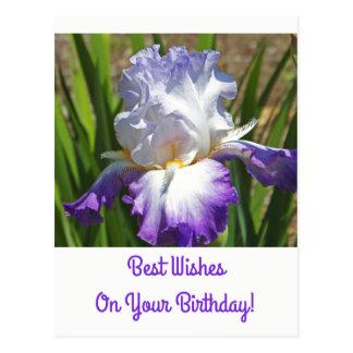 Birthday Postcard/White and Purple Iris/Best Wish Postcard