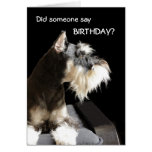 Birthday Schnauzer Greeting Card