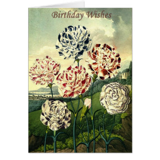 Birthday Wishes - Striped Carnation Card