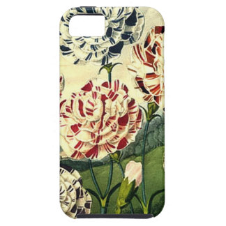 Birthday Wishes - Striped Carnation iPhone 5 Cover