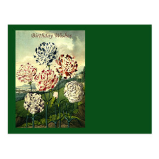 Birthday Wishes - Striped Carnation Postcard