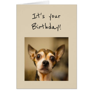 Birthday's are Scary Fun Chihuahua Dog Greeting Card