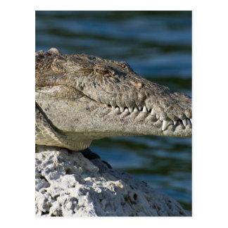 biscayne-national-park-80-dangerous-water postcard