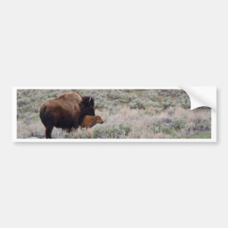 Bison and Calf Bumper Sticker