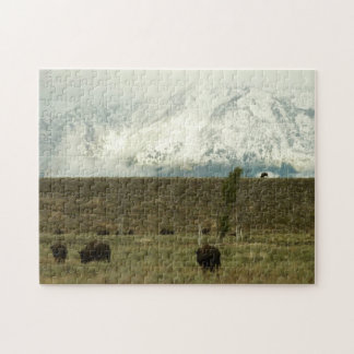Bison at Grand Teton National Park Photography Puzzle
