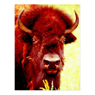 Bison / Buffalo Face Postcard