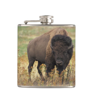 Bison Buffalo Hip Flask
