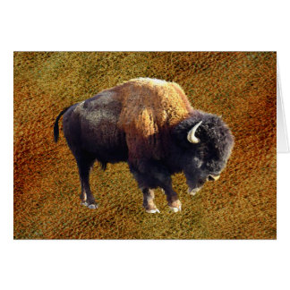 Bison Buffalo Wildlife Greeting Card