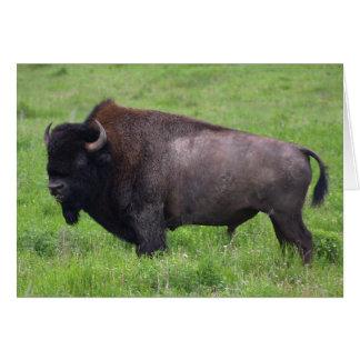 Bison Buffalo Wildlife Note Card