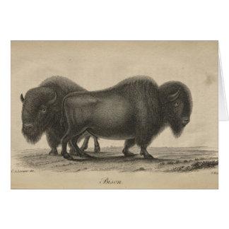Bison Card